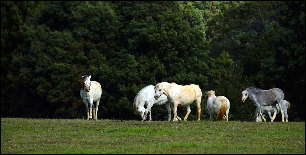 Click image for larger version  Name:Ponies.jpg Views:1 Size:654.3 KB ID:28593