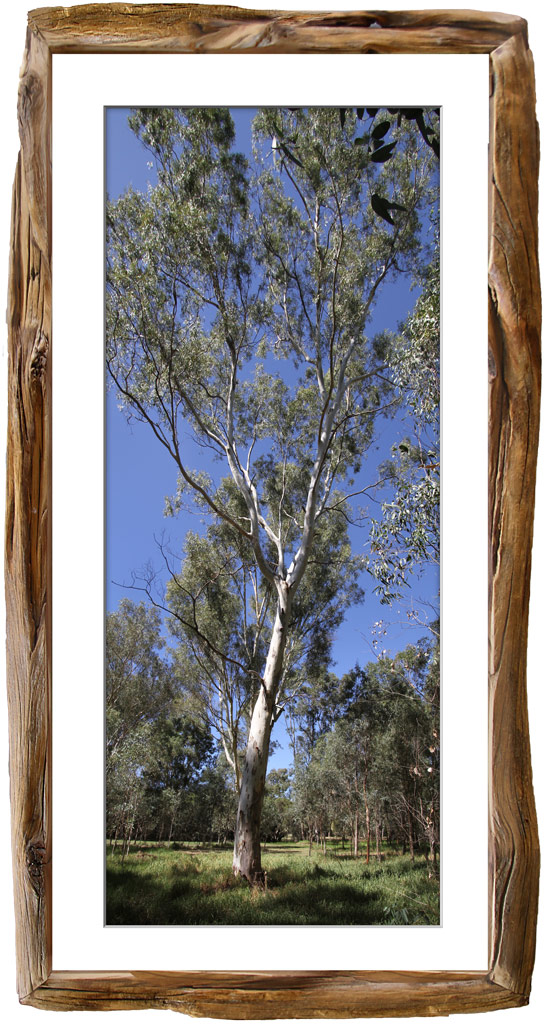 Click image for larger version  Name:Tree-Framed.jpg Views:1 Size:199.2 KB ID:30549