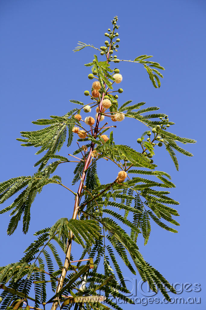 Click image for larger version  Name:Tree-ID-1.jpg Views:1 Size:199.4 KB ID:30552