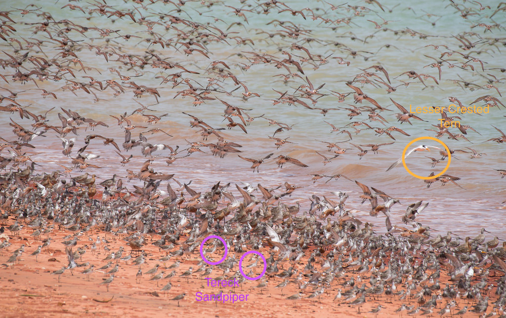 Name:  Waders 2.jpg