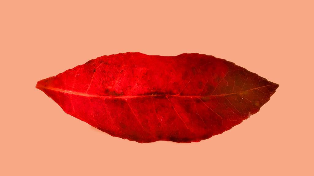 Name:  Leaf lips pinkPH.jpg Views: 1 Size:  83.3 KB