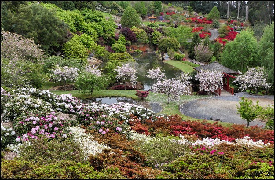 Click image for larger version  Name:Garden .jpg Views:1 Size:374.1 KB ID:31277