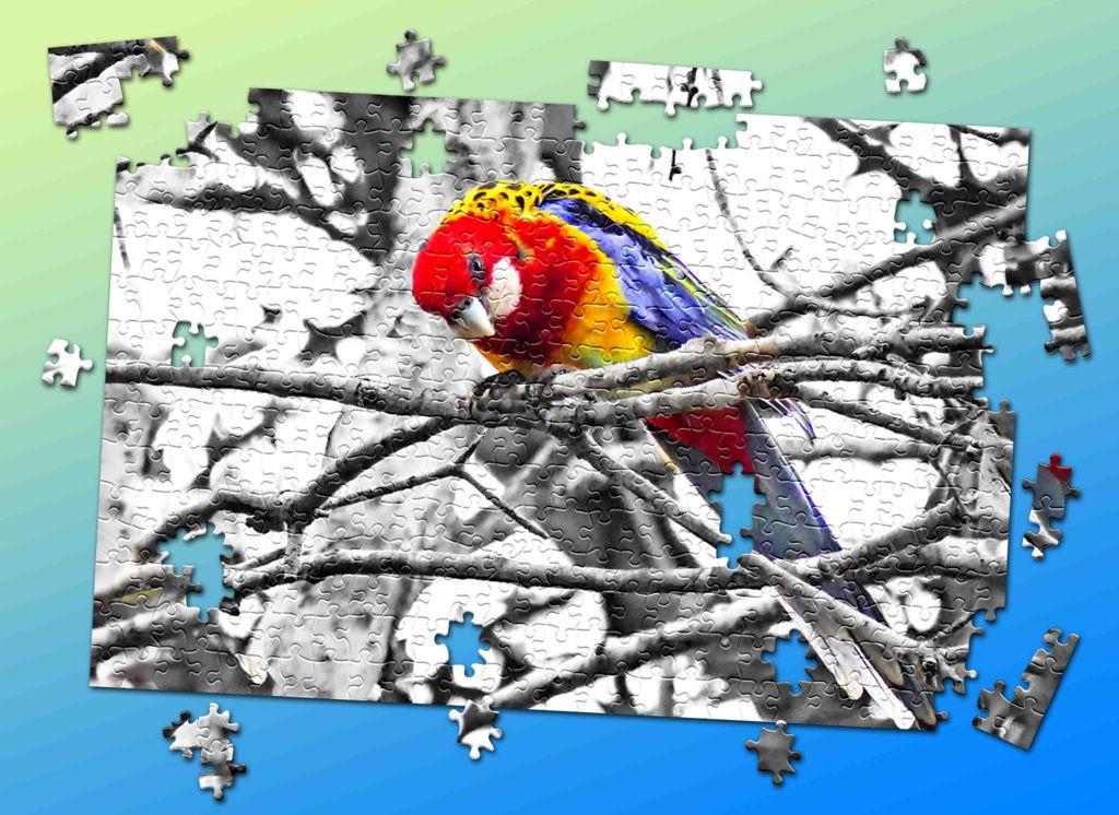 Click image for larger version  Name:seaslug-jigsaw-SM.jpg Views:1 Size:158.3 KB ID:31302