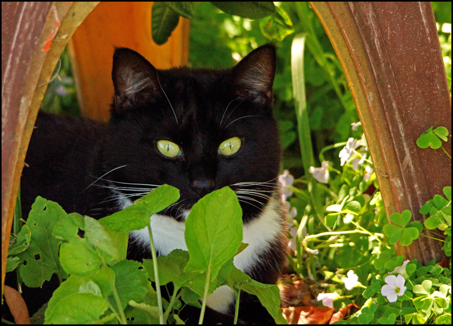 Click image for larger version  Name:Monty's hiding spot.jpg Views:1 Size:223.5 KB ID:31319