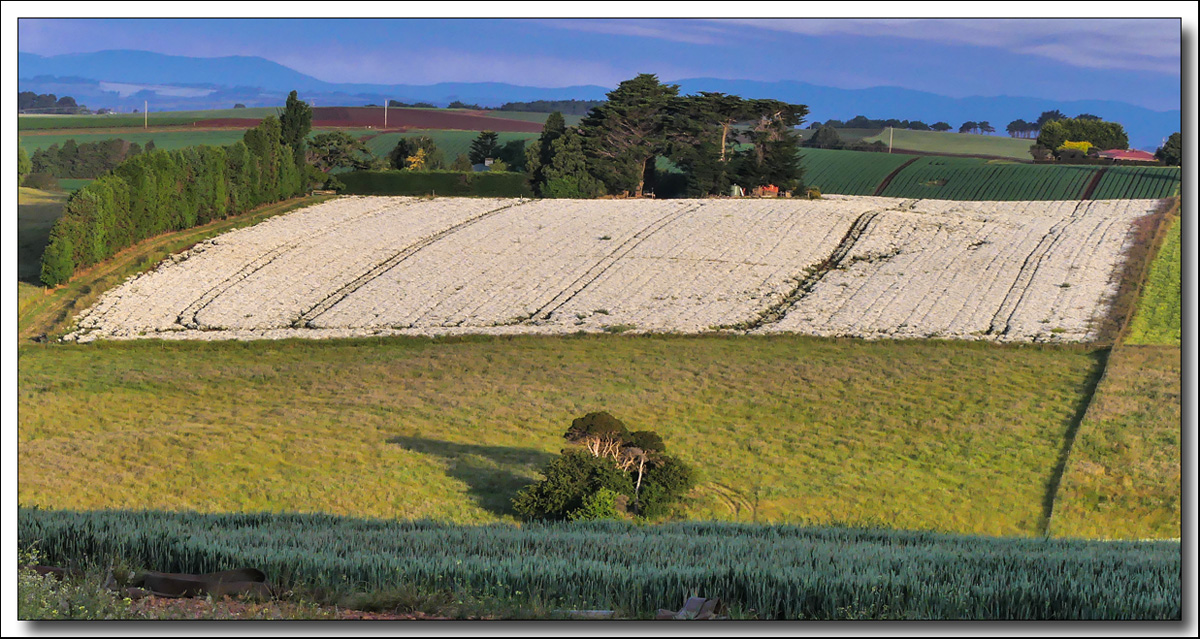 Click image for larger version  Name:White field .jpg Views:1 Size:420.6 KB ID:31444