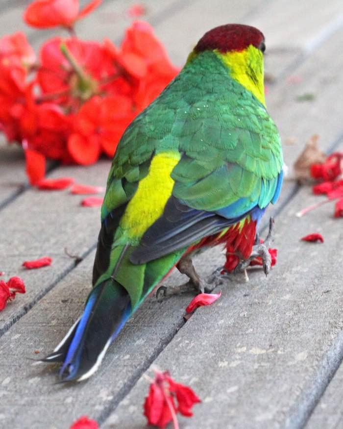Name:  Parrot06a.jpg Views: 1 Size:  66.1 KB