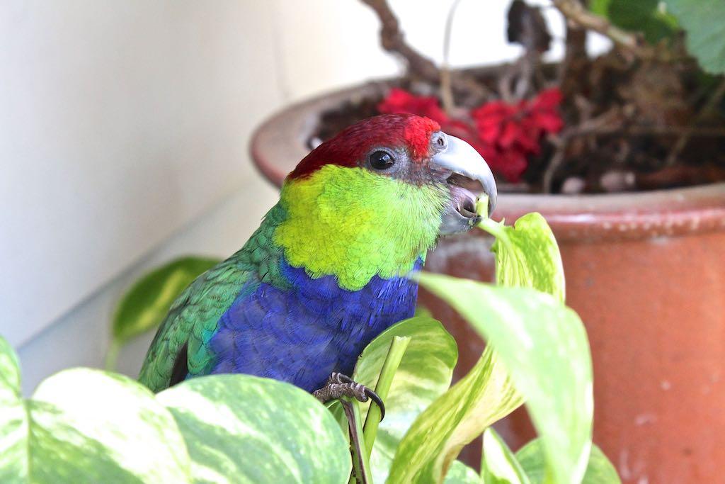 Name:  Parrot09 .jpg Views: 1 Size:  76.6 KB
