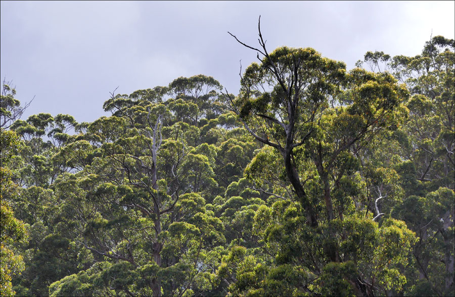 Click image for larger version  Name:Trees.jpg Views:1 Size:205.6 KB ID:31580