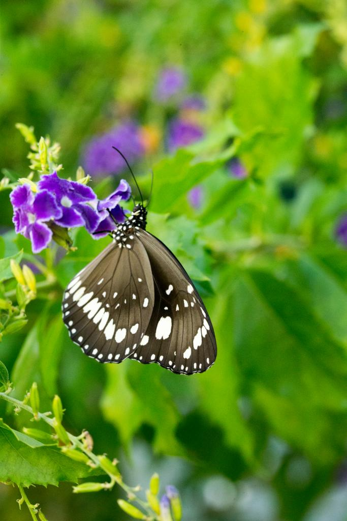 Click image for larger version  Name:Butterfly2-2.jpg Views:1 Size:79.8 KB ID:31601